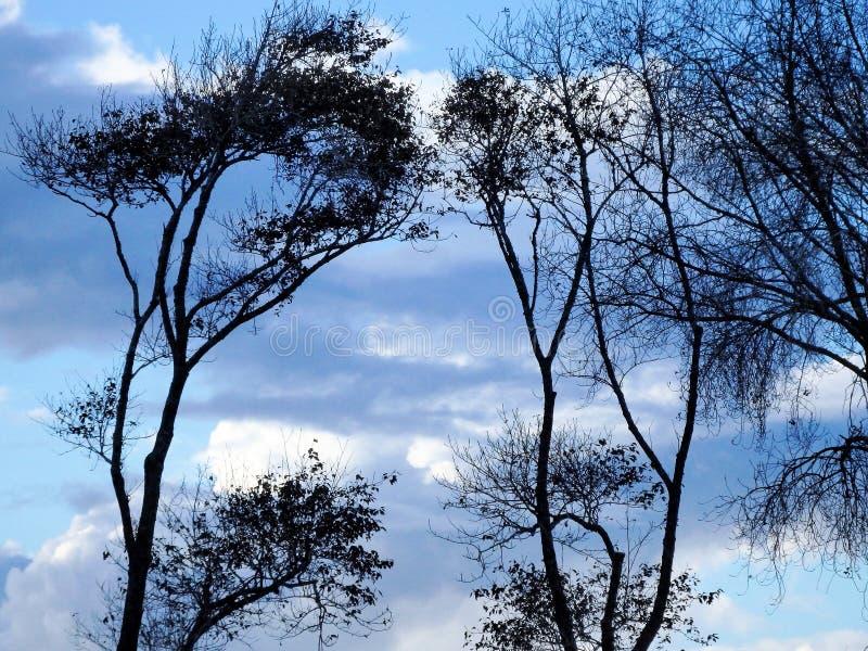 Contraste de ciel de branches images libres de droits