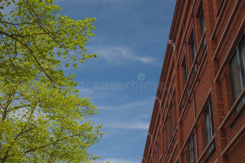 Contraste del árbol del edificio fotos de archivo libres de regalías