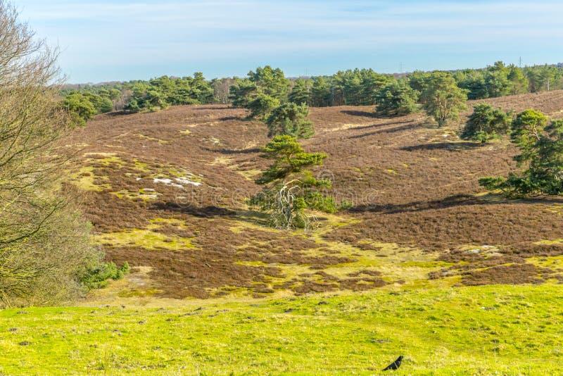 Contraste hermoso de una tierra seca y de otro verde con los árboles en línea y un pájaro negro en la hierba verde fotos de archivo libres de regalías