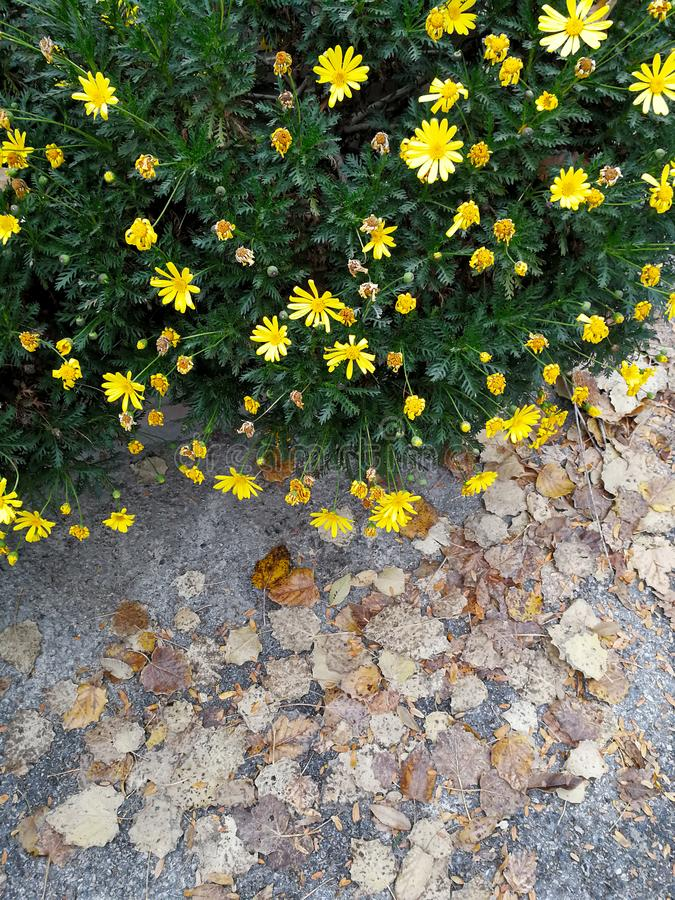 Contraste sec de feuilles sur la nature photographie stock