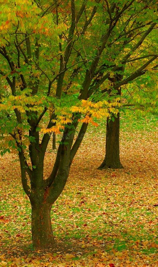 Contrastes del otoño fotos de archivo libres de regalías
