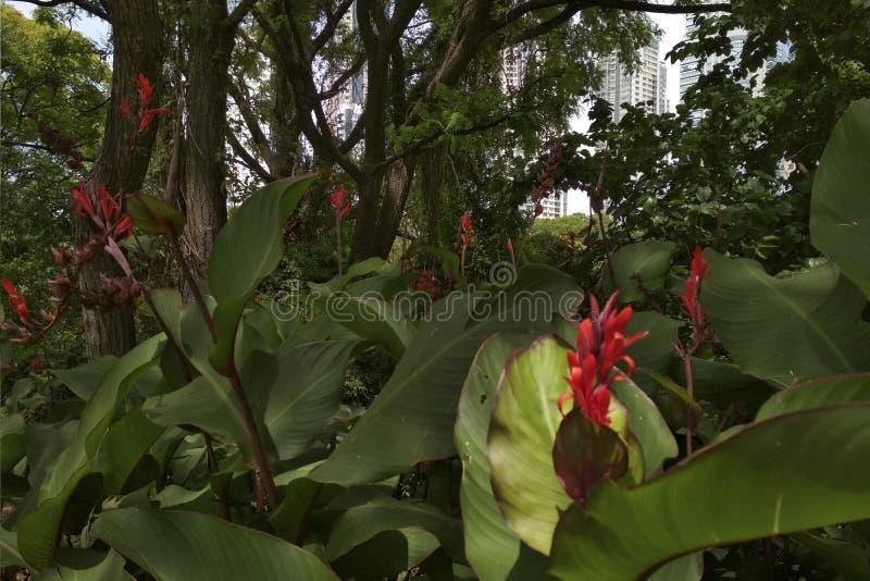contrastes Naturaleza, flores y ciudad imagenes de archivo