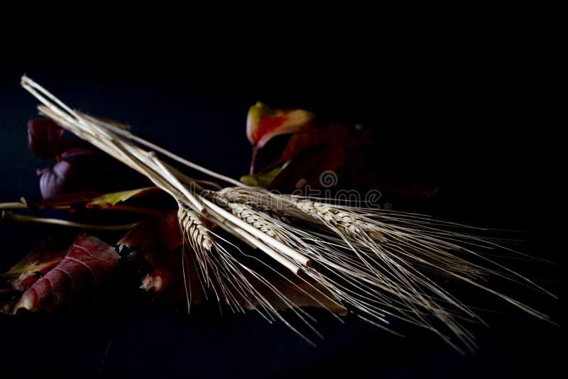Contrasti dell'orecchio dei semi e delle foglie autunnali fotografia stock libera da diritti