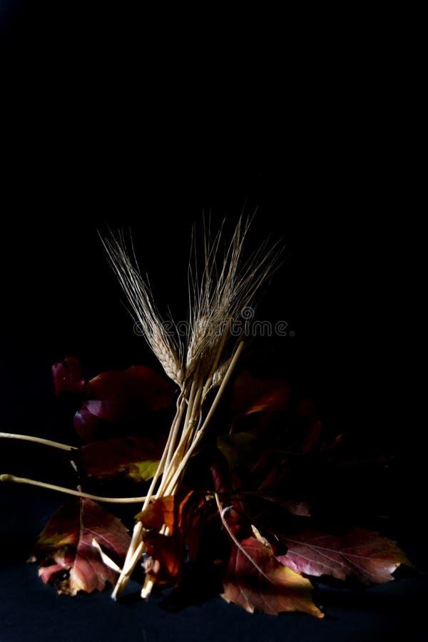 Contrasti dell'orecchio dei semi e delle foglie autunnali fotografie stock libere da diritti