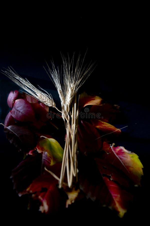 Contrasti dell'orecchio dei semi e delle foglie autunnali immagini stock