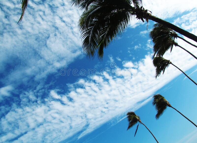 Contrasting blue sky against white clouds, and dancing palm trees. Contrasting blue sky, with differente blue tones, with clouds that contrast and stand out stock image