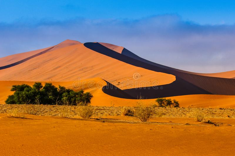 Contrasting Dune in the Afternoon Sun. Namibia Desert, Namibia. Africa royalty free stock photography