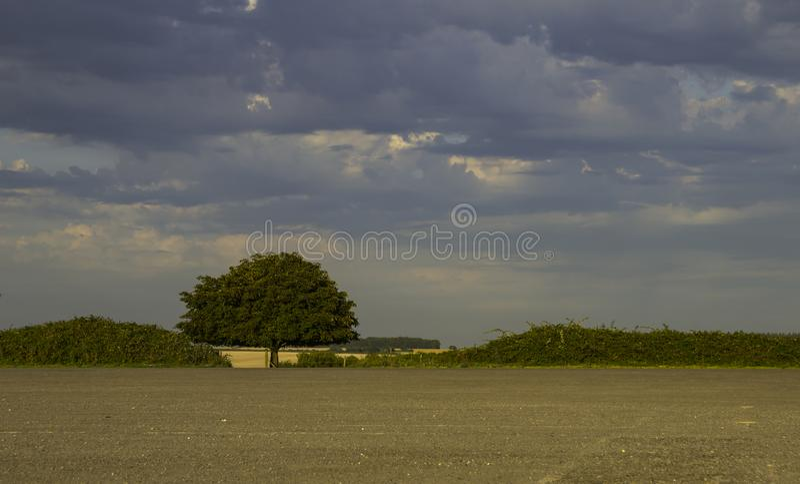 Contrasto della ghiaia e dell'albero del cielo fotografie stock libere da diritti
