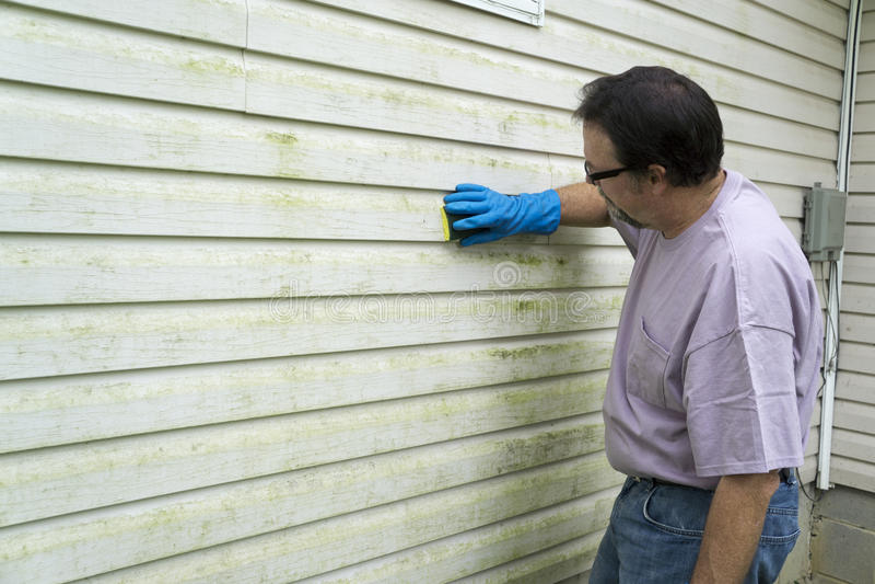 Contratista que quita algas y el molde del apartadero del vinilo imágenes de archivo libres de regalías