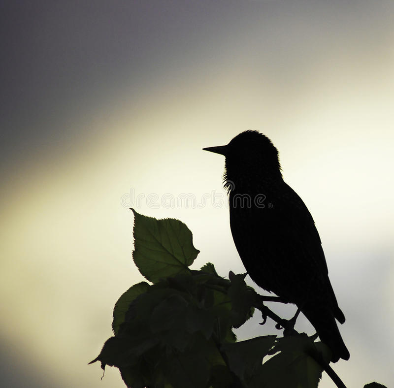 Contre-jour Royalty Free Stock Photo