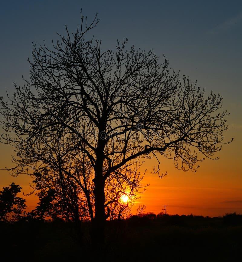 contre l'arbre de coucher du soleil photos stock