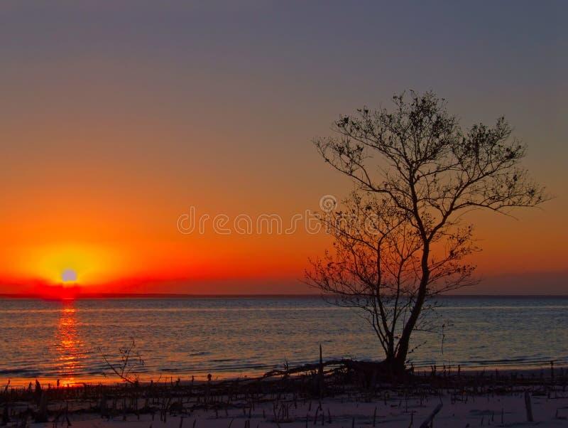 contre l'arbre de coucher du soleil image stock