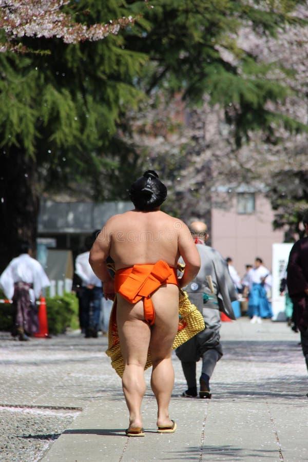 Contrefiche de sumo images libres de droits