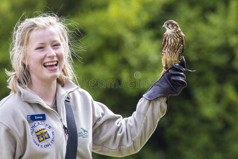 Controlador del pájaro con Merlin Falcon imagen de archivo libre de regalías
