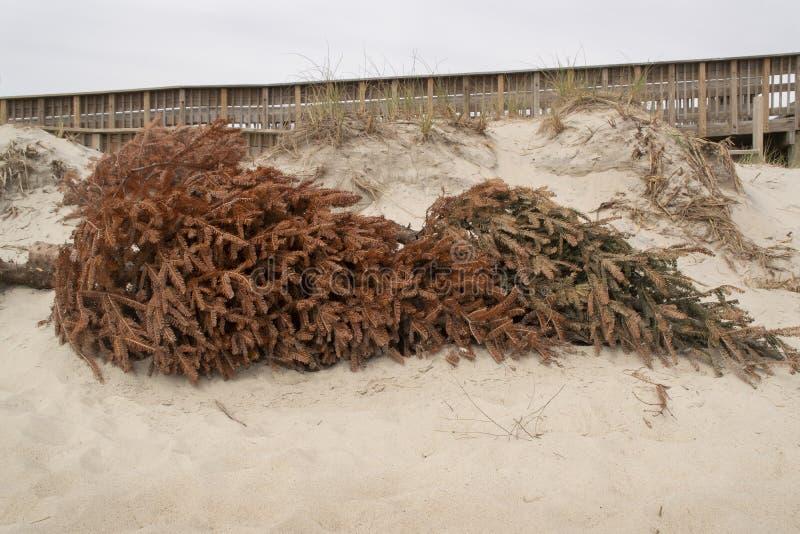 Controle natural da erosão da duna de areia foto de stock
