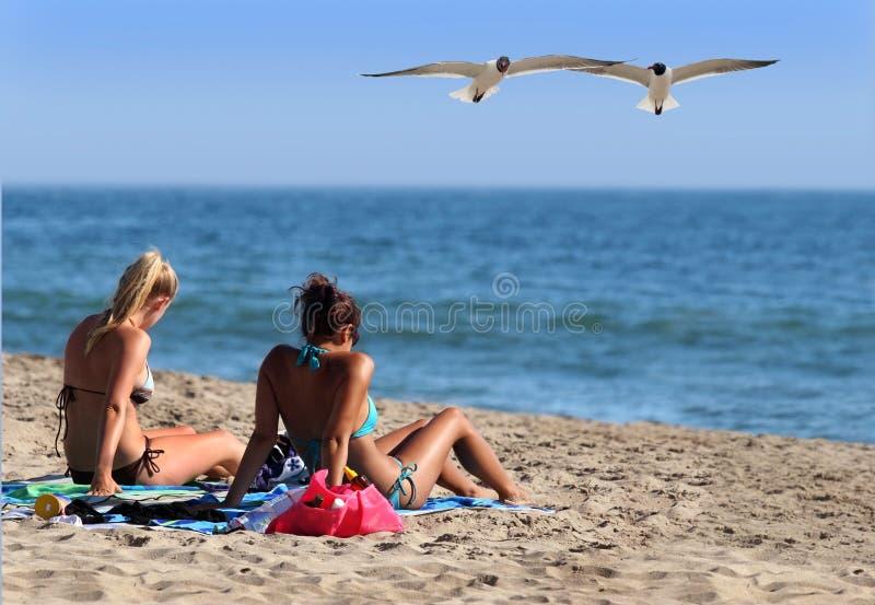 Download Controleer hen! stock foto. Afbeelding bestaande uit gulls - 283536