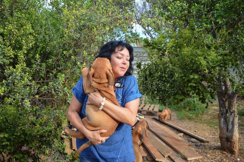 Controles maduros del criador de perros de la mujer su acción de Boerboel fotografía de archivo libre de regalías