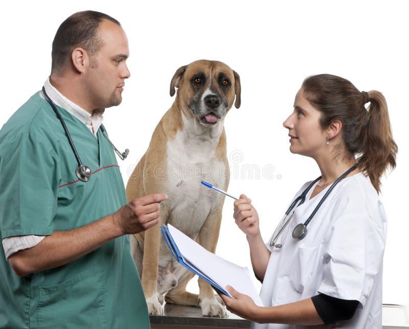 Controllare che esaminano un cane dell'incrocio, cane fotografie stock