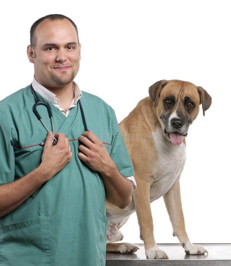 Controllare che si leva in piedi vicino ad un cane dell'incrocio fotografia stock