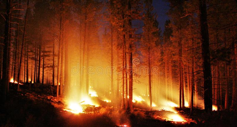 Glowing forest fire stock image