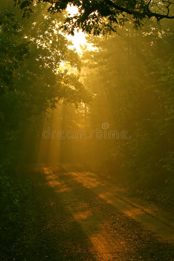 Download Contry Road With Beams Of Light Stock Image - Image: 170263