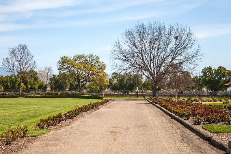 Converging Pathway Leading To Vineyard, Winter Season With Bare Trees stock photography