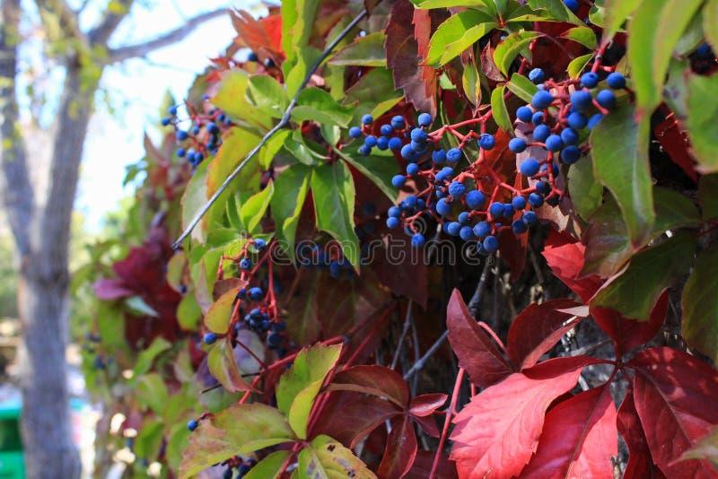 Conversão brilhante - cores do outono imagens de stock royalty free
