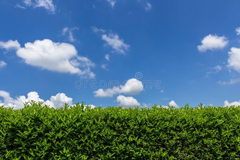 Conversão contra o céu fotografia de stock
