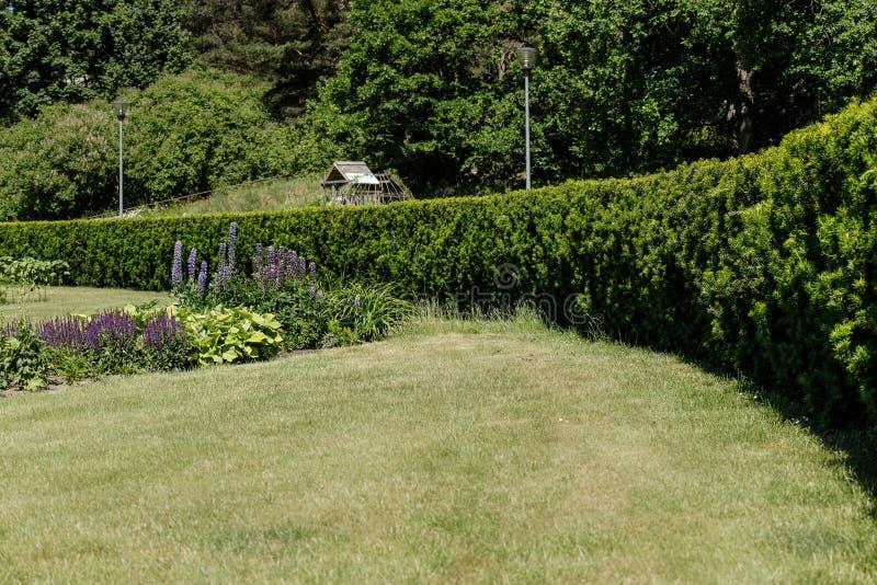 Conversão convergentes no parque com gramado e canteiro de flores fotografia de stock