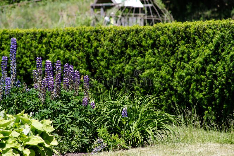 Conversão convergentes no parque com gramado e canteiro de flores foto de stock royalty free