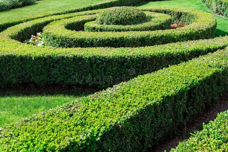 Conversão do buxo com arbustos aparados imagem de stock royalty free