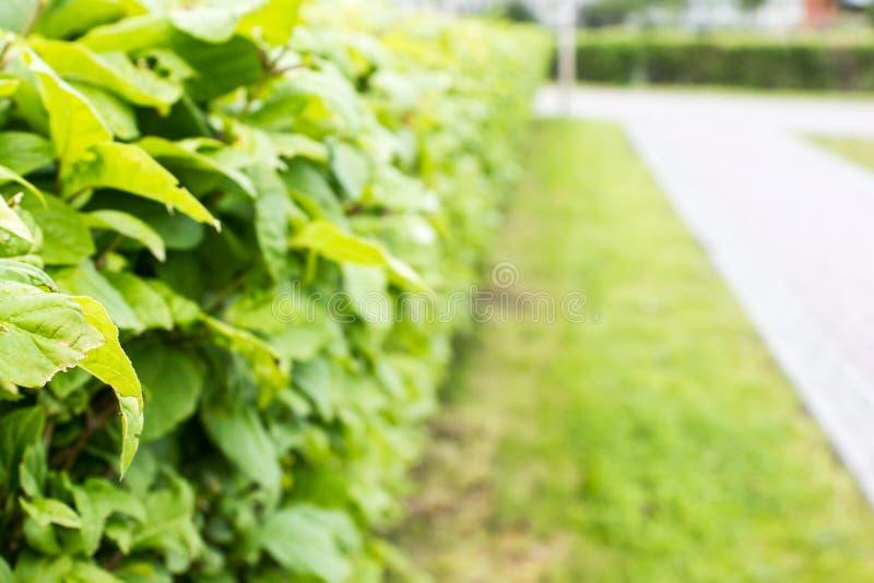 Conversão dos arbustos fotografia de stock royalty free