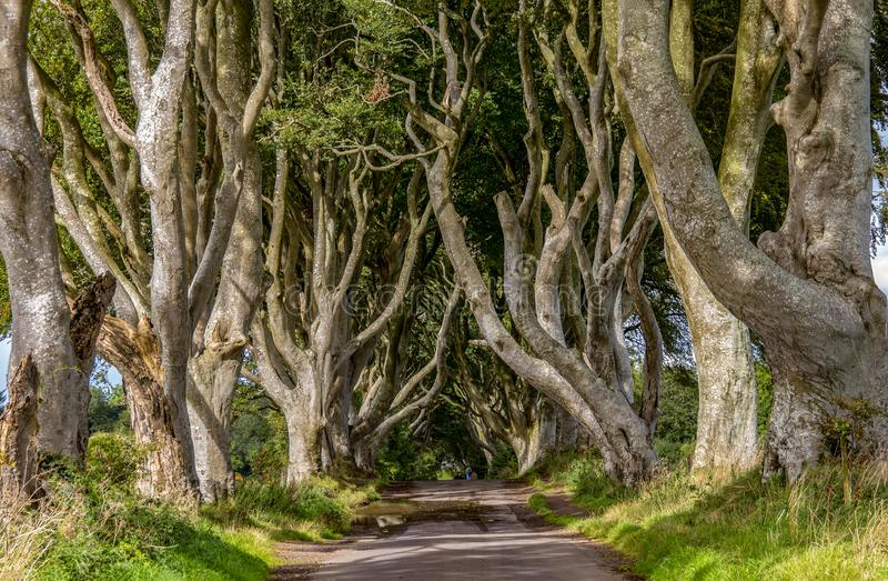 Conversão escuras - a estrada famosa foto de stock royalty free