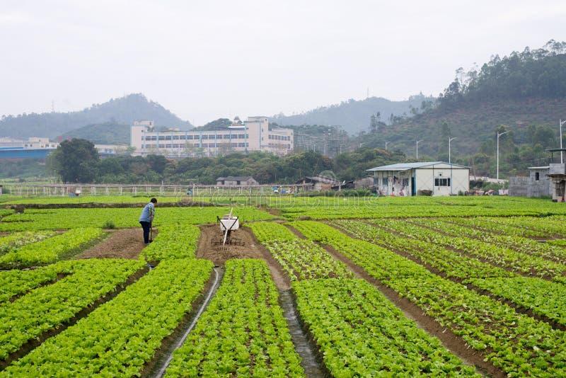Conversão vegetal dos fazendeiros na porcelana imagem de stock royalty free