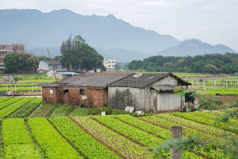Conversão vegetal dos fazendeiros na porcelana foto de stock royalty free