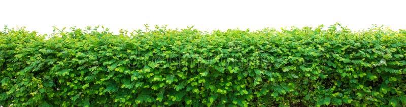 Conversão verde fotografia de stock royalty free