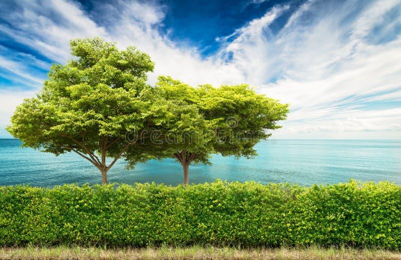 Conversão verde com árvore imagens de stock