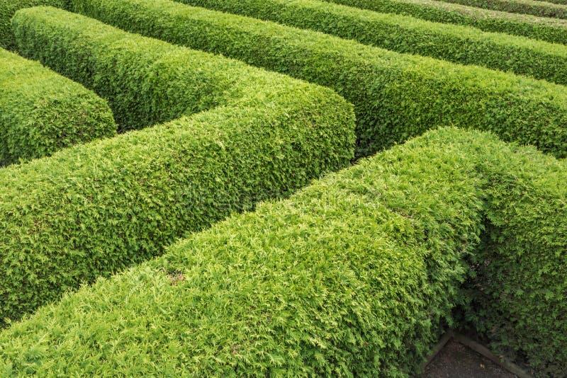 Conversão verdes de um labirinto visto de cima de imagem de stock