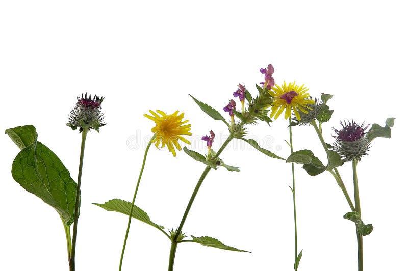 Conversa das flores imagens de stock