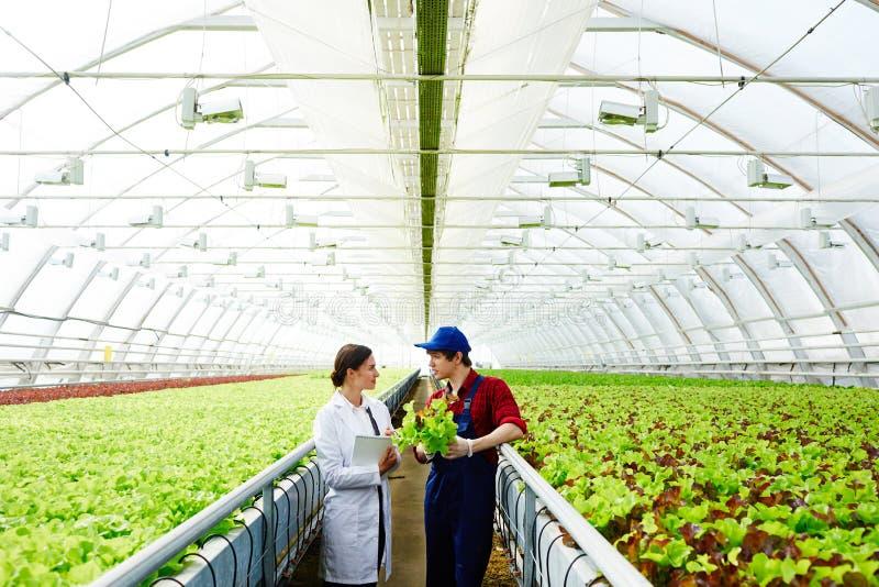 Conversa de peritos agrícolas imagens de stock