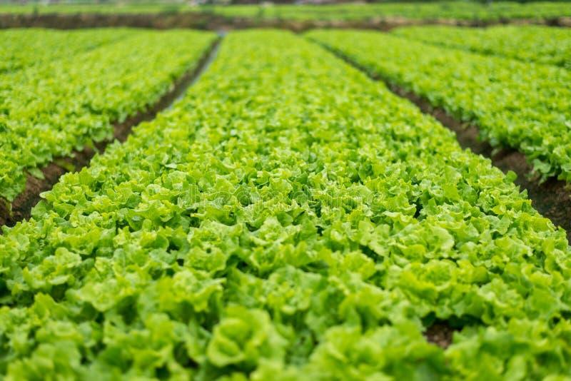 Conversión vegetal de granjeros en China fotos de archivo