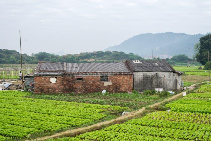 Conversión vegetal de granjeros en China imagenes de archivo