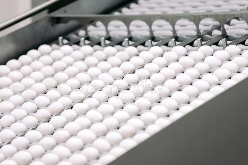 Conveyor transporting lot of fresh eggs royalty free stock image