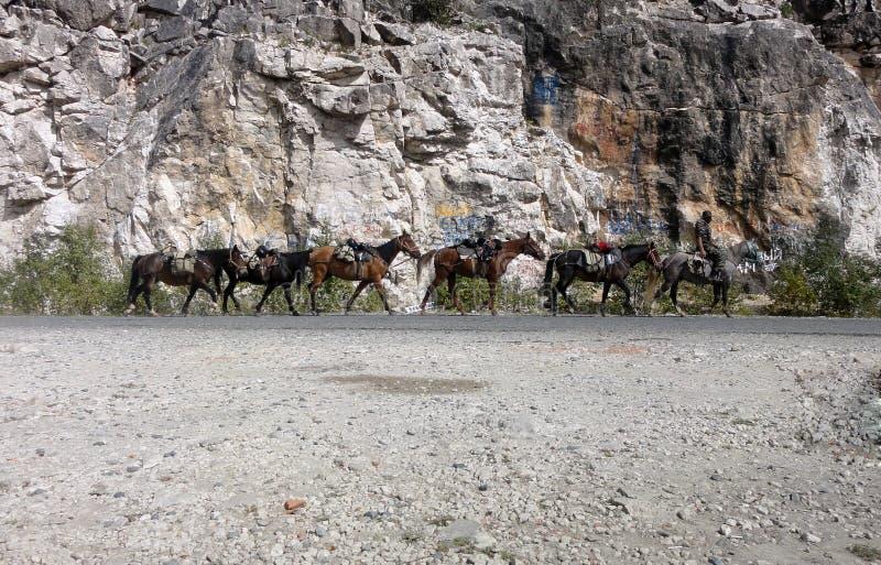 Convoglio del cavallo immagine stock