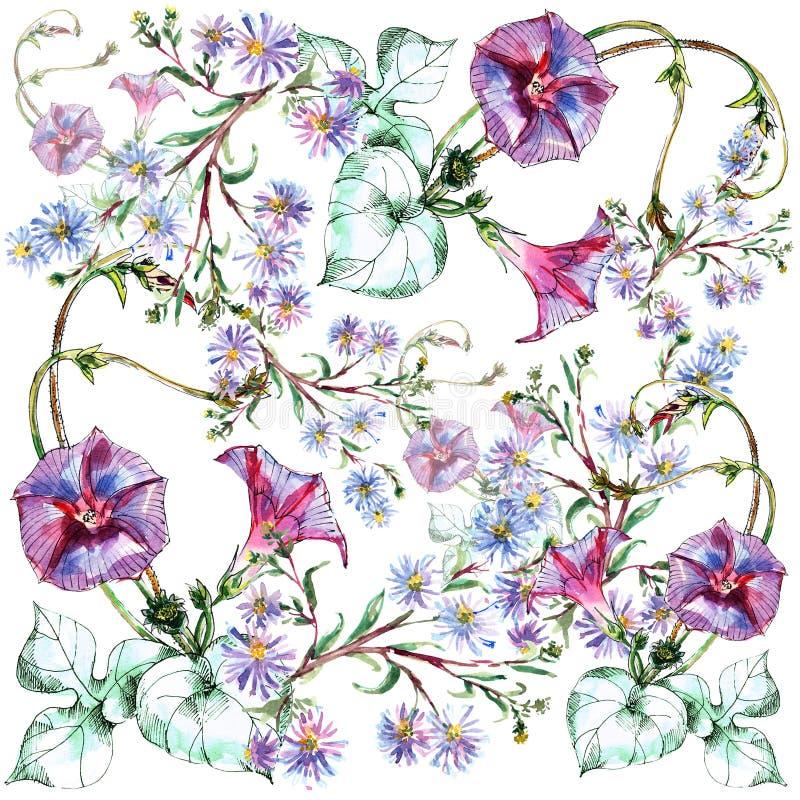 Convolvolo, mazzo blu del fiore, acquerello, modello illustrazione vettoriale