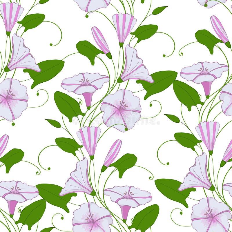 Convolvule élégant floral de fond liseron tendre sans couture de fleur de modèle ornement féminin sans fin de Matin-gloire illustration libre de droits