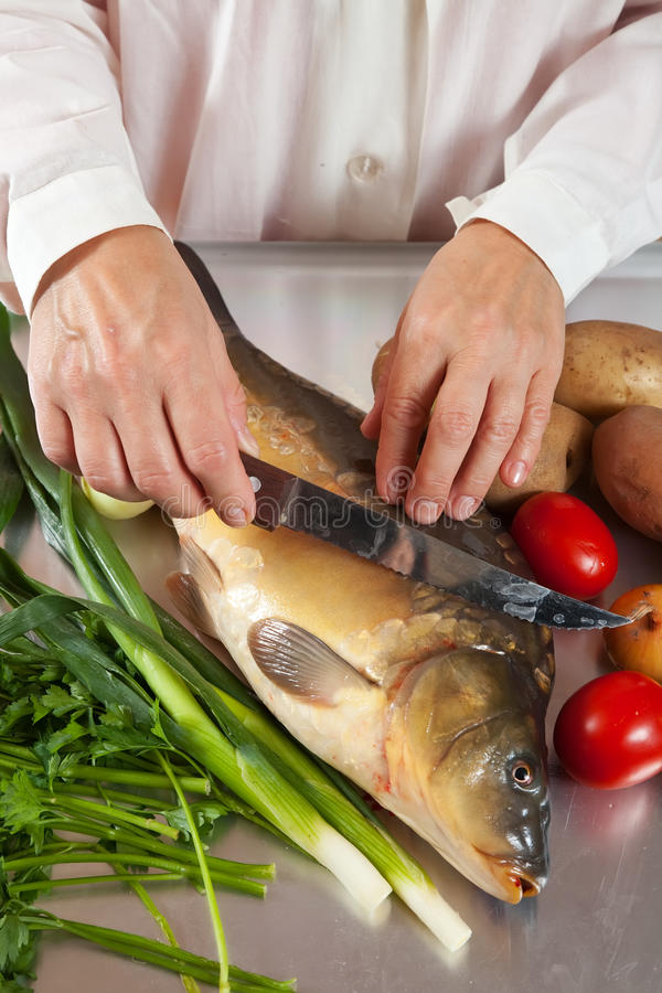 Cook cooking carp fish. Closeup of cook cooking carp fish in kitchen royalty free stock photo