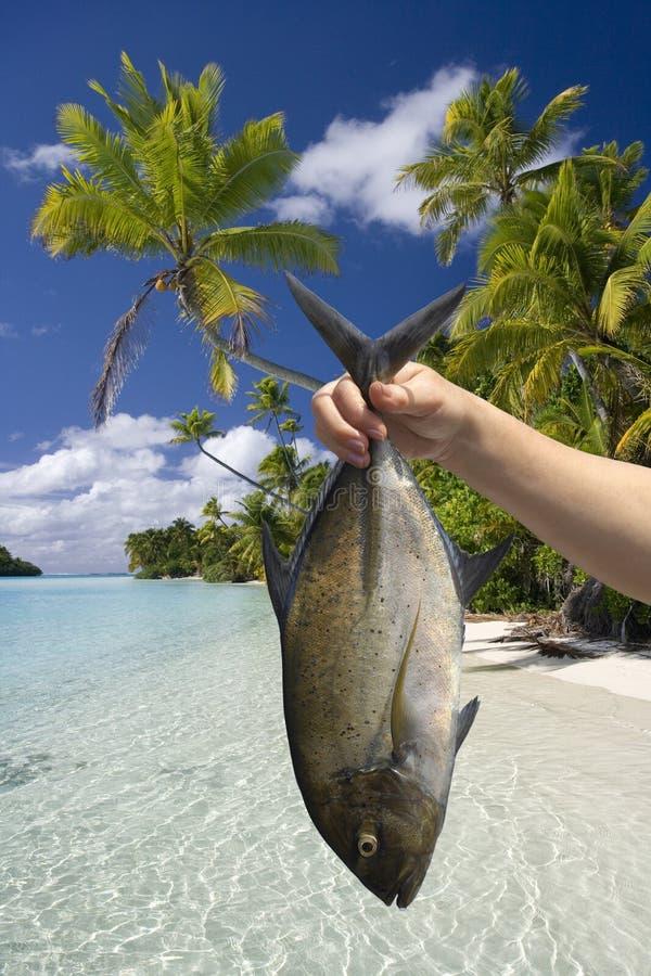 Cook Islands - Fish caught in Aitutaki Lagoon. A fish caught in the warm waters of Aitutaki Lagoon in the Cook Islands in the South Pacific Ocean. The fifteen royalty free stock photos