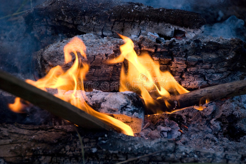 Download Cook out fire stock photo. Image of block, tree, wood - 6031348