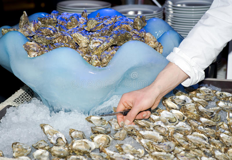 Download Cook preparing oysters stock image. Image of appetizer - 28483999